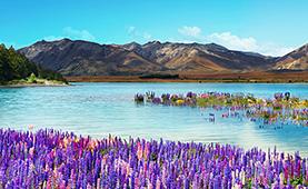 한겨울에 만나는 반가운 여름<br>뉴질랜드 전세기